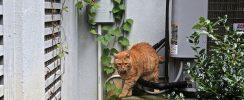 HVAC, cat